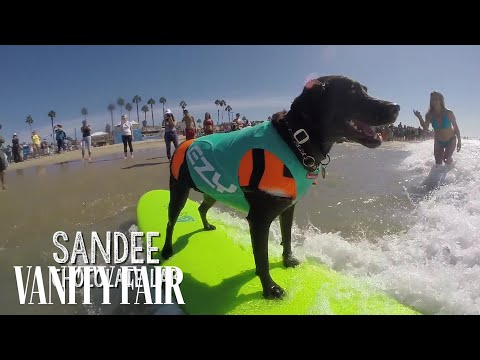 The World's Only Dog Surfing Competition
