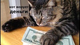 HMV-Money Cat (man)