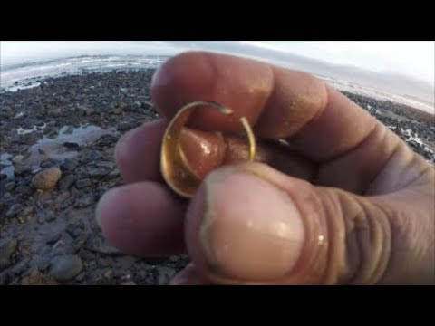 Beach Metal Detecting The Gold Finds Continue!