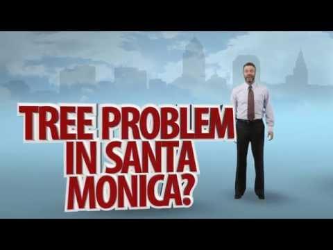 Tree Services in Santa Monica, CA