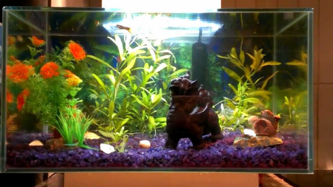 Fluval Edge Freshwater Tropical Community Fish Tank