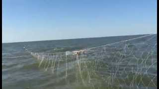 Каспийское море. Километры браконьерских сетей в Камынино
