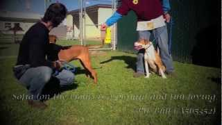 Volunteer And Staff Training At Ventura County Animals Shelter