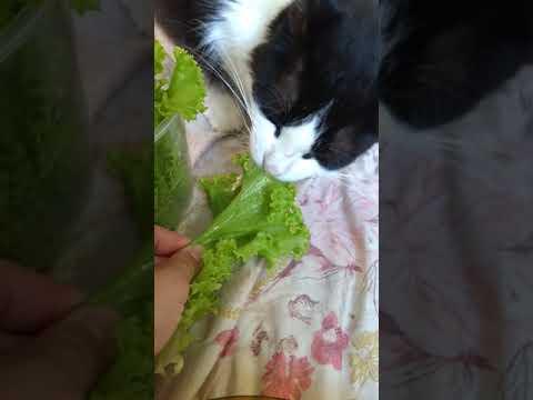 Jared o gato vegetariano