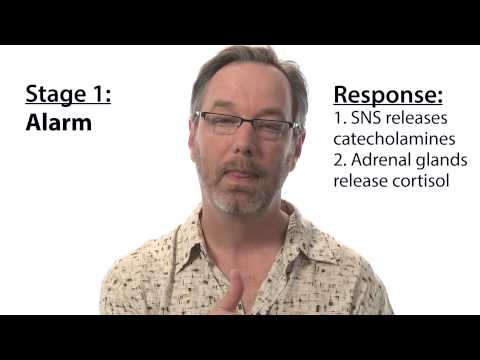 Three stages of stress response - Intro to Psychology
