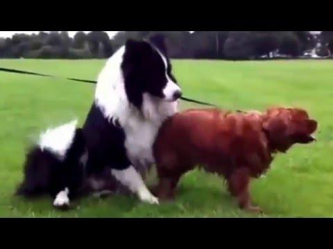 wonders dogs !!!!