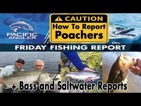 How To Report A Poacher In BC + The Vancouver Fishing Report For August 14th