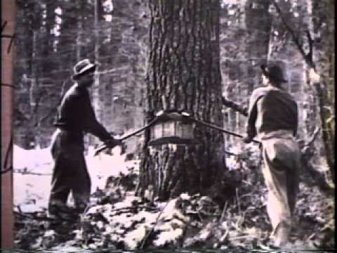 The Wisconsin Loggers: 1989 - Part 1, A, King of the Woods