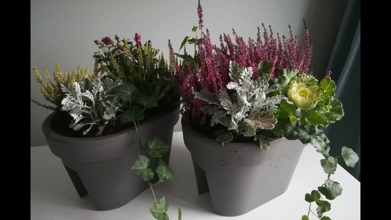 Kwiaty Jesienne Na Balkon Co I Jak Posadzić