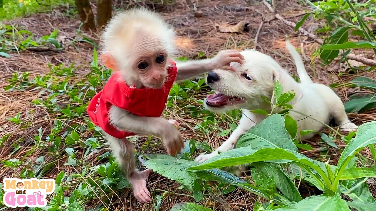 Cute baby monkey Amee