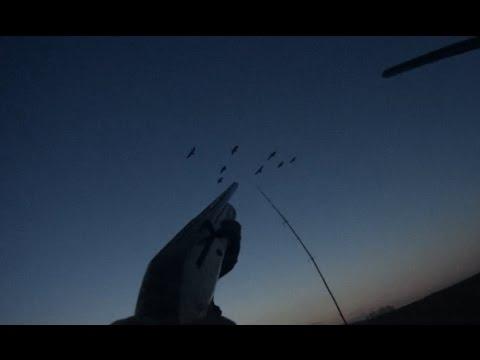 Охота на медведя видео онлайн - смотреть видео об охоте на