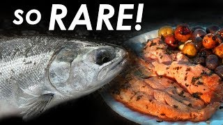 Michigan River Salmon... in MARCH?!?! Catch and Cook SPRING Salmon