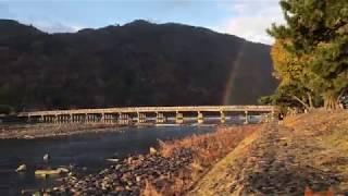四国犬  渡月橋にアレが!!! thumbnail