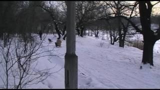 зимние виды спорта.wmv