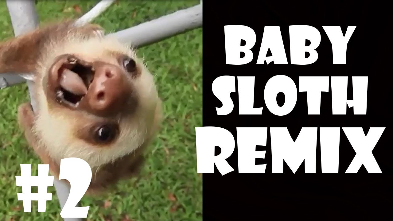 Screaming Baby Sloth - Remix Compilation #2 - YouTube