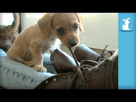 Puppies Love Shoes More Than Toys - Puppy Love