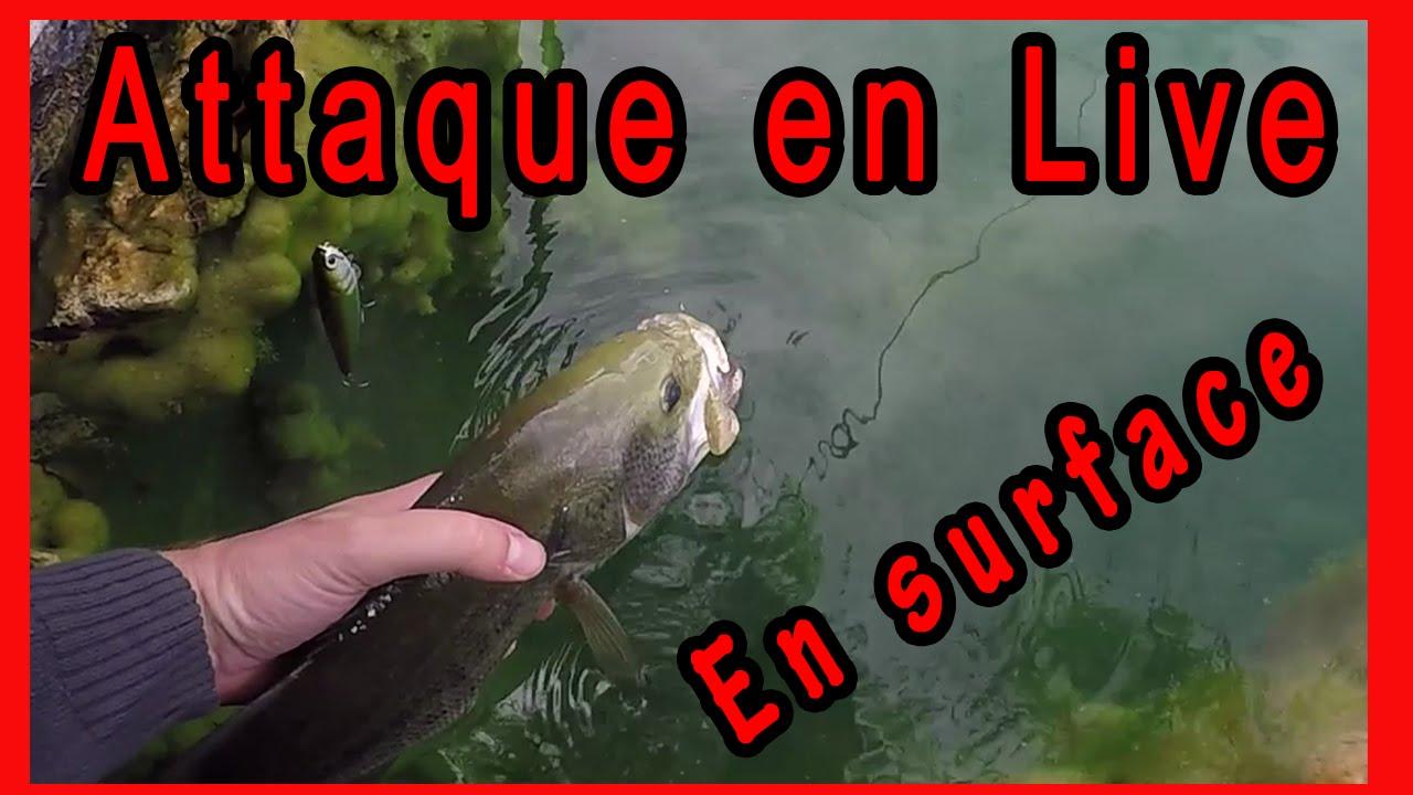 7587ea74d87 Sammy mon ami de la pêche au GROS BLACK BASS - Le StickBait Lucky Craft by  FISHTIQUE