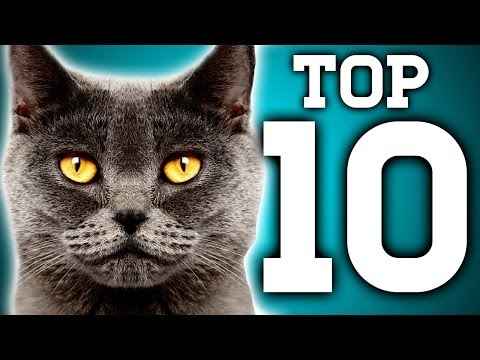 Awesome! 10 Cat Facts You Need to Know - Earth Unplugged