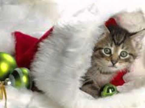Santa Baby ❤❤☆҉‿↗⁀☆҉   Eartha Kitt
