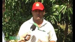 Recomendaciones para el cultivo de Mangos