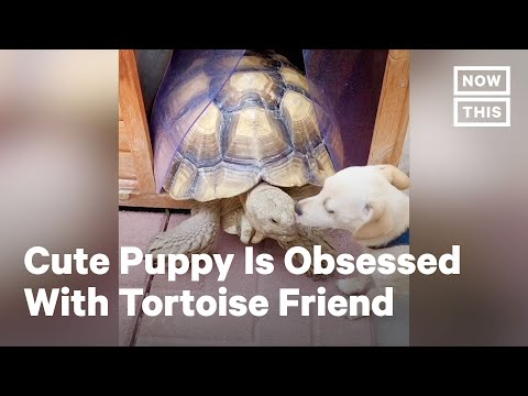Skippy the Rescue Puppy Is Obsessed with Tortoise Friend | NowThis