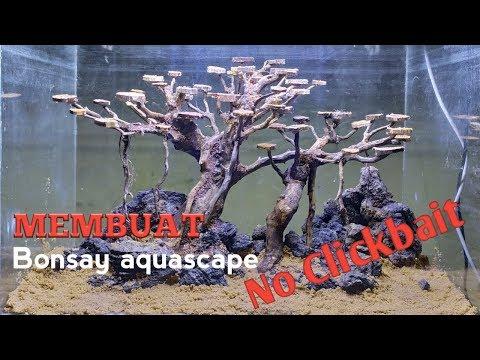 tutorial-membuat-bonsay-aquascape-untuk-pemula-vlog#4