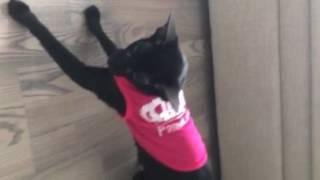 Платье - парализатор для кошки