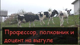 Подготовка к зимнему периоду/Пылесосим коров/Покраска стен в коровнике/Избавляемся от мух