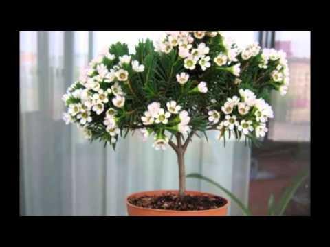 Комнатные растения Украина, цветы по каталогу Запорожье