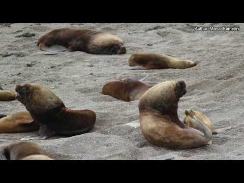 Falkland Islands. Argentina: Valdes Peninsula. Uruguay. South America and Antartica part 6