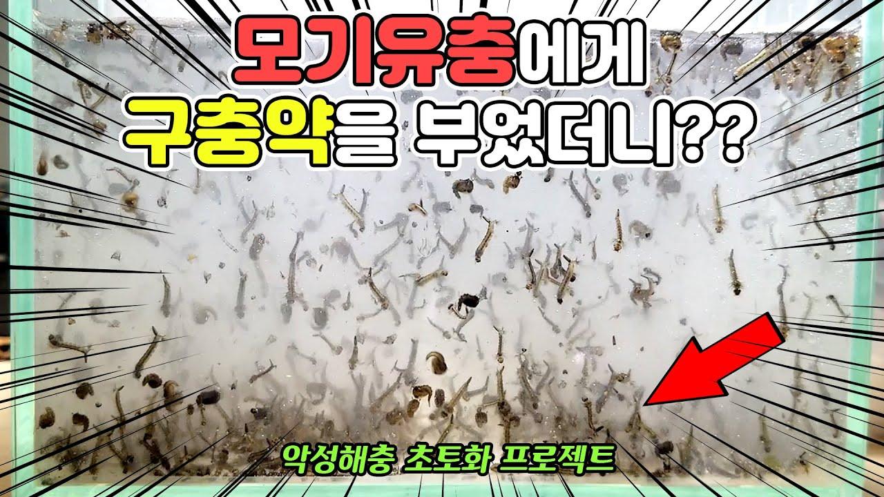 [모기지옥2] 장구벌레1000마리에게 강아지 구충제를 부었더니...대박반전 영상 끝까지 보세요