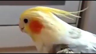 Смешной попугай Аркаша забавные животные funny parrot