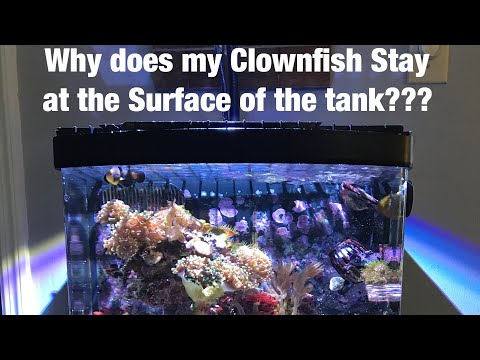My Clownfish Stays At The Surface Of The Tank???