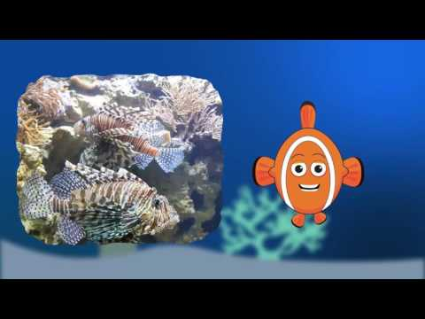 """Swimming Creatures of the Fifth Day by Jeannie Fulbright Audio book """"Defense"""""""
