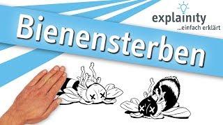 Bienensterben einfach erklärt (explainity® Erklärvideo)