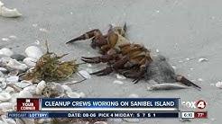 City of Sanibel continues fish kill clean-up