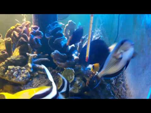 Saltwater aquarium only marine fish  one year update