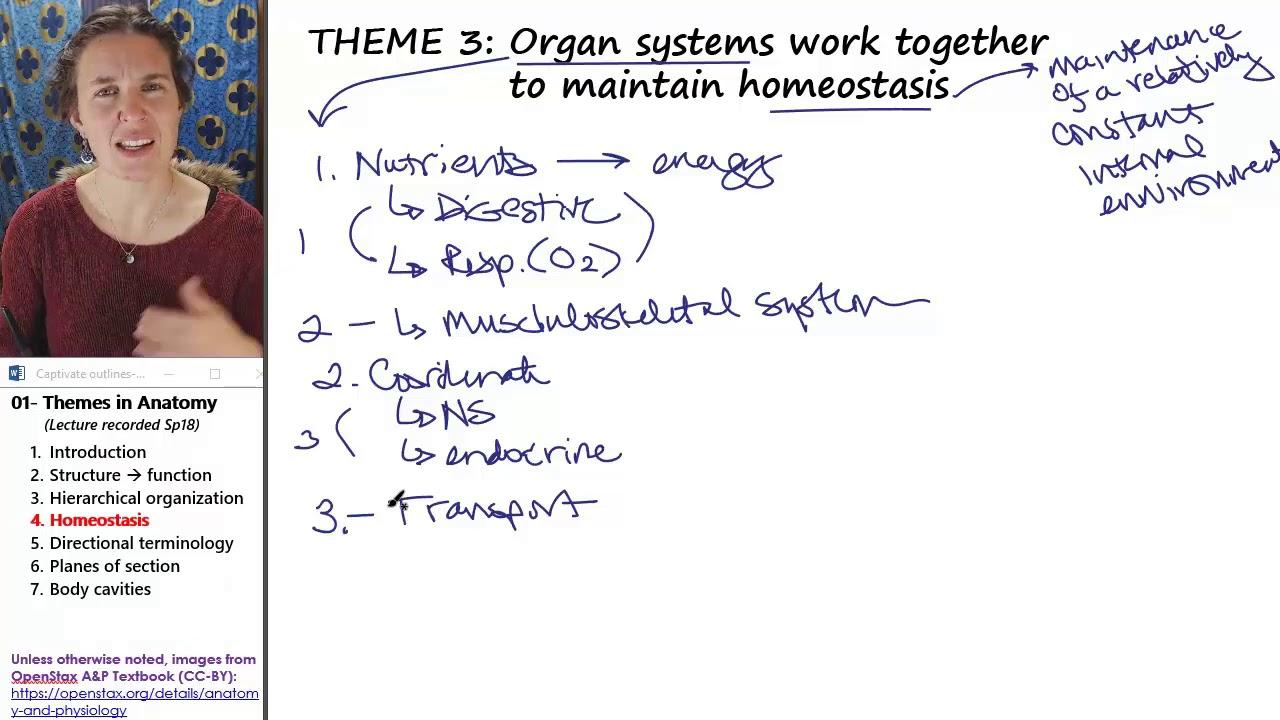 Fein Anatomy And Physiology Openstax Bilder - Physiologie Von ...