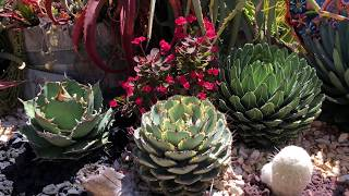 Video Private Succulent Garden Tour with Laura Eubanks download MP3, 3GP, MP4, WEBM, AVI, FLV Juni 2018