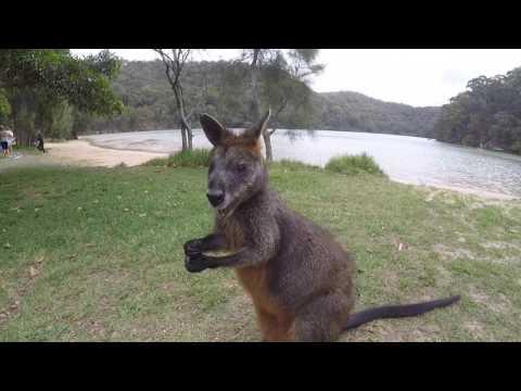 брачное знакомство в австралии