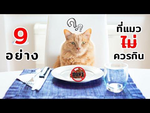 9 อย่างที่แมวไม่ควรกิน (อันตราย)