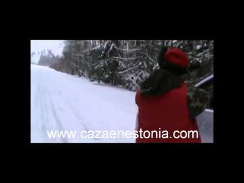 Wild Boar Hunting In Estonia