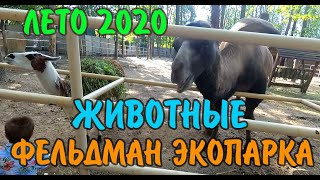 Поездка в Фельдман Экопарк в Харькове (лето 2020 года) / Природа, животные, развлечения.