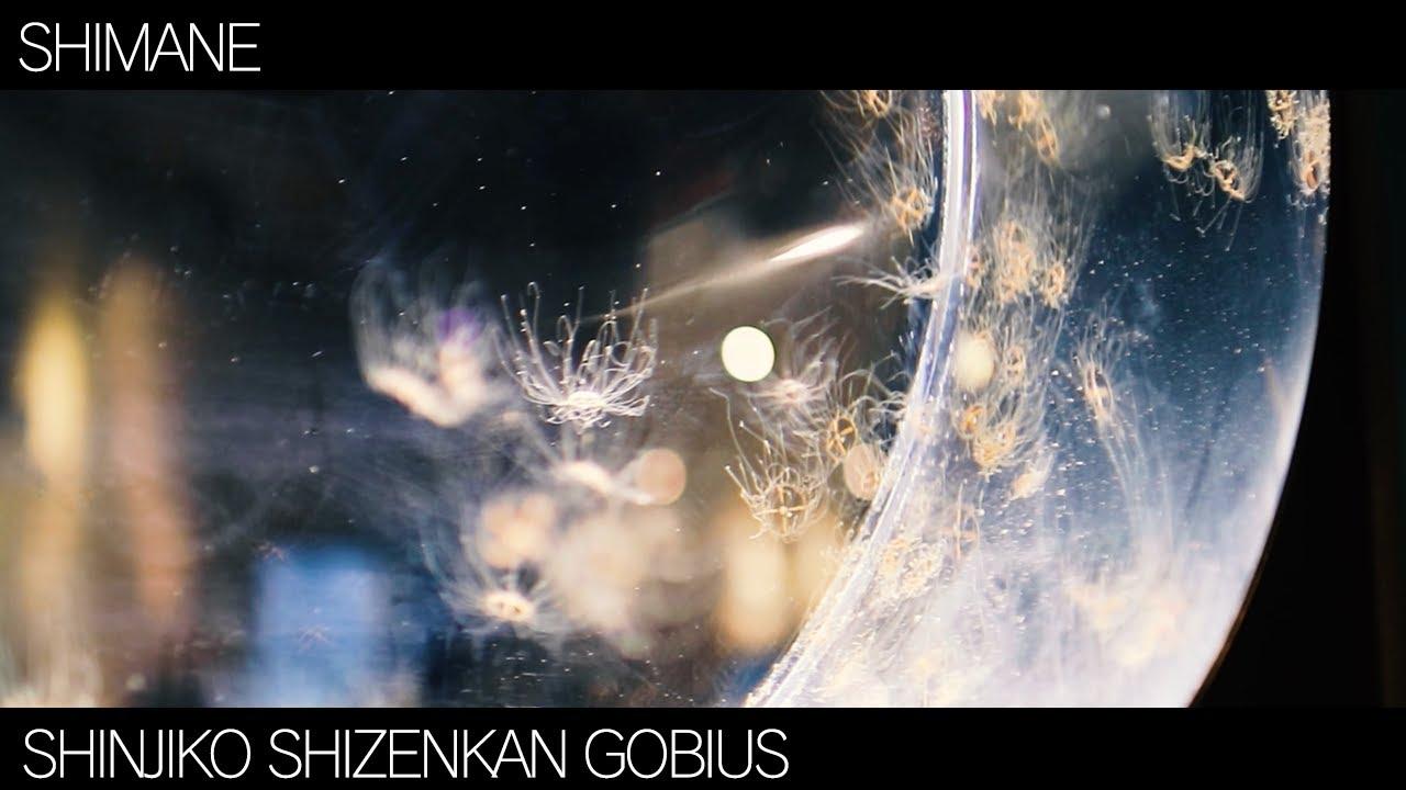 ゴビウス様【島根】宍道湖自然館ゴビウスをお届けします【水族館】