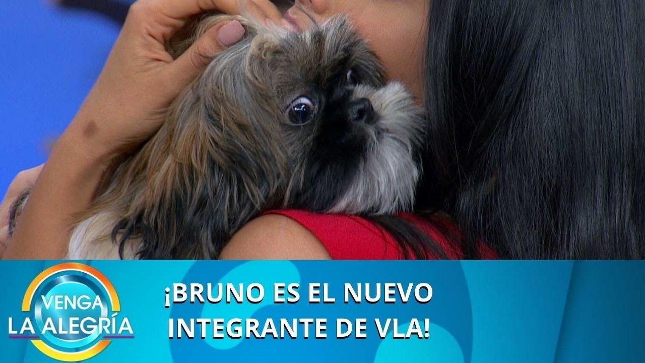 ¡Bruno es el nuevo integrante de VLA! | Programa del 27 de enero de 2020 PARTE 2 | Venga La Alegría