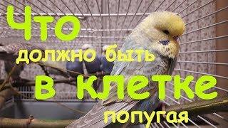 📎 Что должно быть в клетке у волнистого попугая