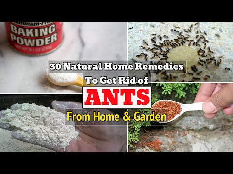 30-natural-home-remedies-to-get-rid-of-ants-from-home-&-garden