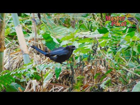 🔴trap-the-bird-using-a-net