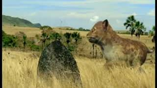 Walking with Beasts Se1 - Ep05 Sabre Tooth - Part 01