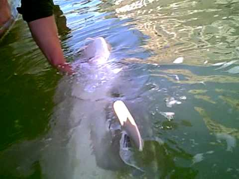 Catching over sized sturgeon on the Columbia River